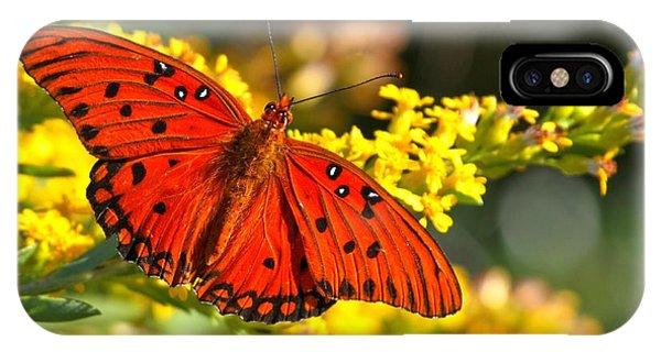 Agraulis Vanillae iPhone Case - Orange Gulf Fritillary by Adam Jewell