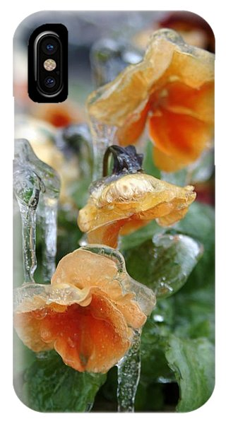 Orange Iced Pansies IPhone Case