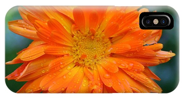 Orange Juice IPhone Case