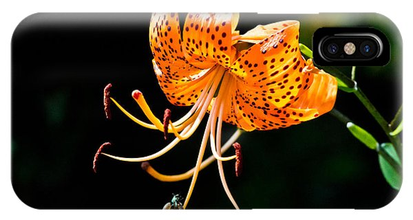 Orange Lily - Lilium Kelleyanum IPhone Case