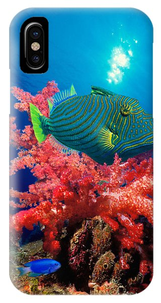 Orange-lined Triggerfish Balistapus IPhone Case