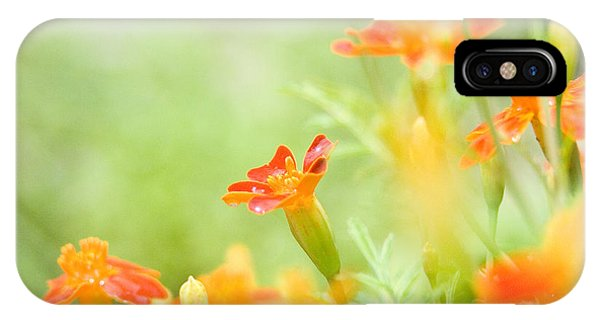 Orange Meadow IPhone Case