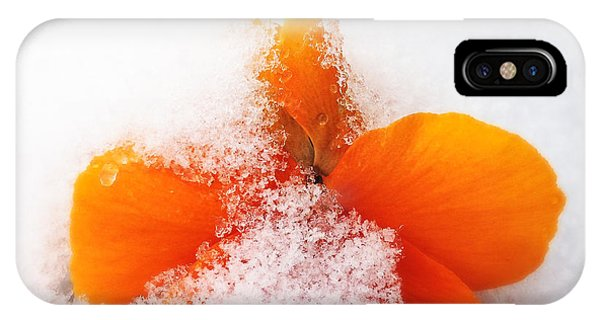 Orange iPhone Case - Orange Pansy Flower Covered With White Snow In Spring by Matthias Hauser