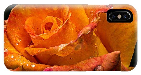 Orange Rose Drops IPhone Case