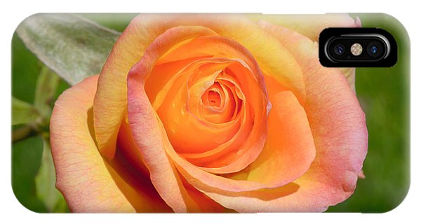IPhone Case featuring the photograph Orange Rose by Jon Exley
