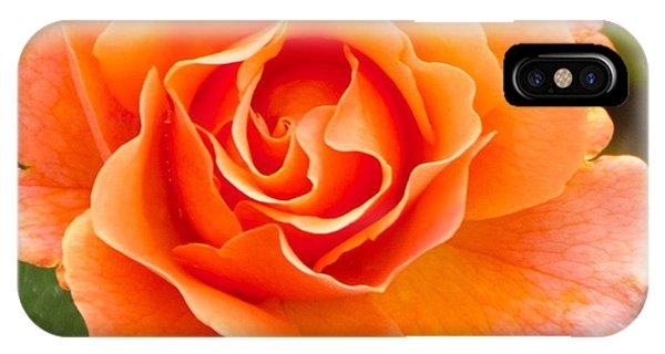 Orange Rose Lillian IPhone Case