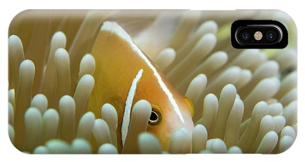 Barrier Reef iPhone Case - Orange Skunk Clownfish by Michael Szoenyi/science Photo Library