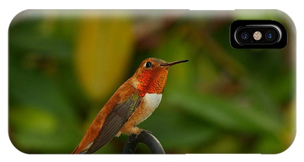 Orange Throated Hummingbird IPhone Case