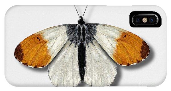Orange Tip Butterfly - Anthocharis Cardamines Naturalistic Painting - Nettersheim Eifel IPhone Case