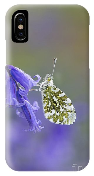 Mottled iPhone Case - Orange Tip Butterfly by Tim Gainey