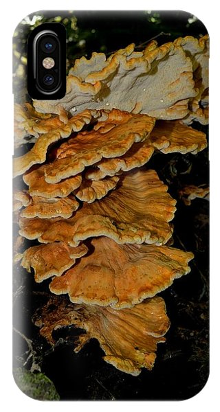Orange Tree Fungus IPhone Case