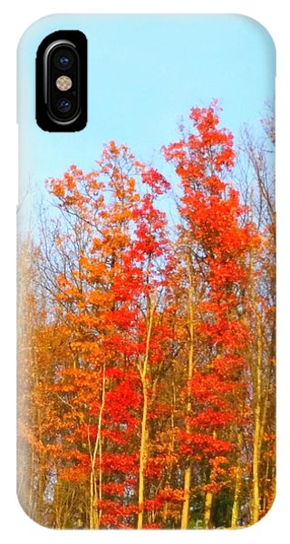 Orange Trees.  IPhone Case