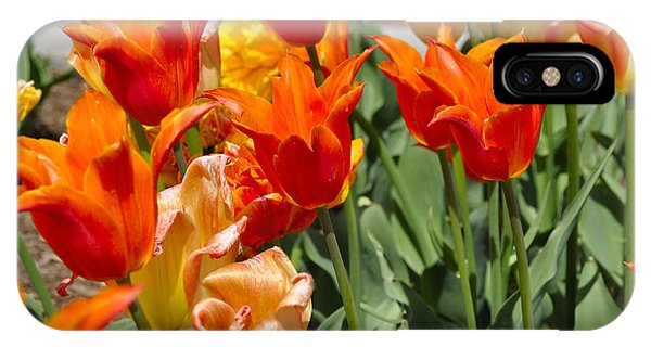 Orange Tulips IPhone Case
