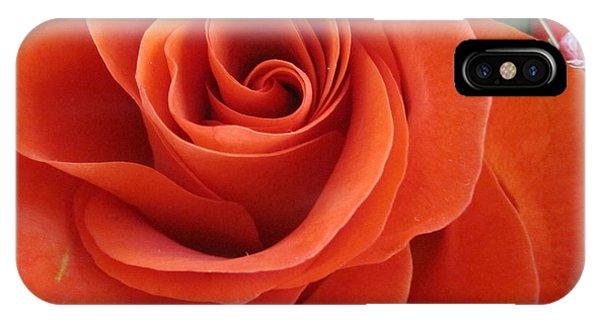 Orange Twist Rose 2 IPhone Case