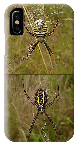 orb weaver spider - Argiope trifasciata - 12SE03 Phone Case by Robert G Mears