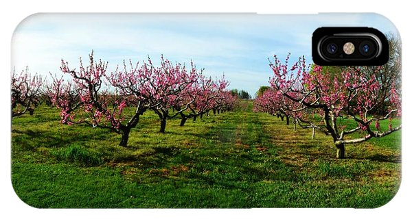 Orchard In Spring IPhone Case