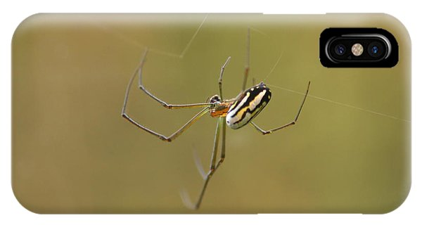 Orchard Spider IPhone Case