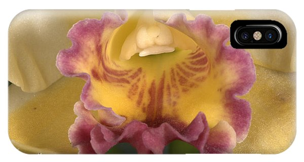 Orchid 478 IPhone Case