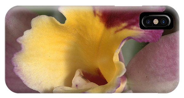 Orchid 489 IPhone Case