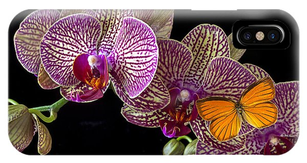 Orchid And Orange Butterfly IPhone Case