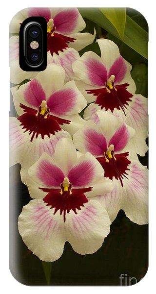 Orchid Beauty All Profits Benefit Hospice Of The Calumet Area IPhone Case