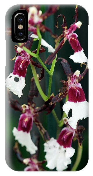 Orchid (oncidium Samurai) Phone Case by Sam K Tran/science Photo Library