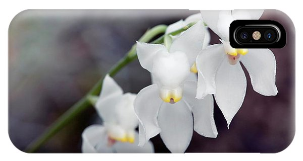 Orchid (osmoglossum Pulchellum) Phone Case by Sam K Tran/science Photo Library