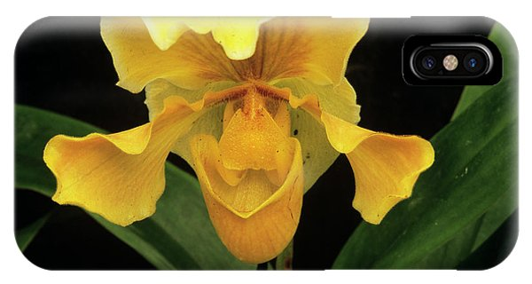 Orchid (paph.sp.) Phone Case by Sally Mccrae Kuyper/science Photo Library