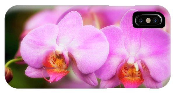 Hybrid iPhone Case - Orchid (phalaenopsis Hybrid) by Maria Mosolova/science Photo Library