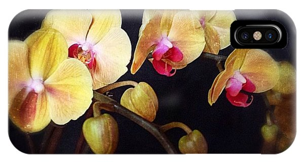 Orchids Arise IPhone Case