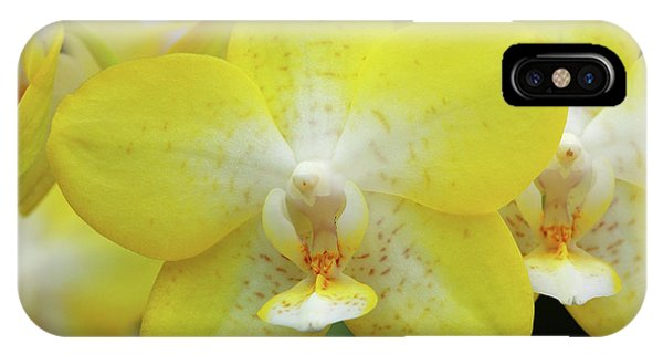 Golden Gardens iPhone Case - Orchids (phalaenopsis 'golden Treasure') by Neil Joy/science Photo Library