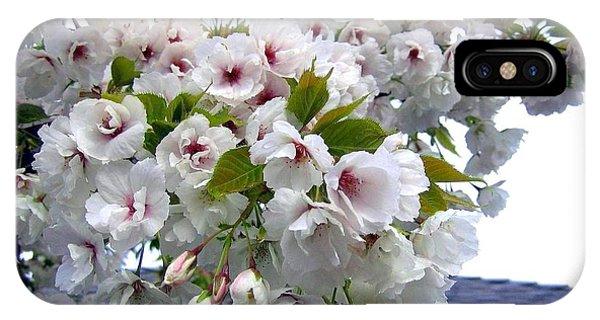 Oregon Cherry Blossoms IPhone Case