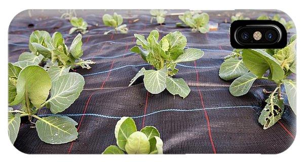Organic Cabbage Crop IPhone Case