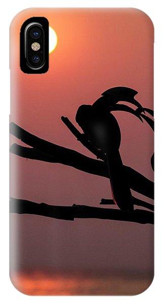 Oriental Pied Hornbills IPhone Case