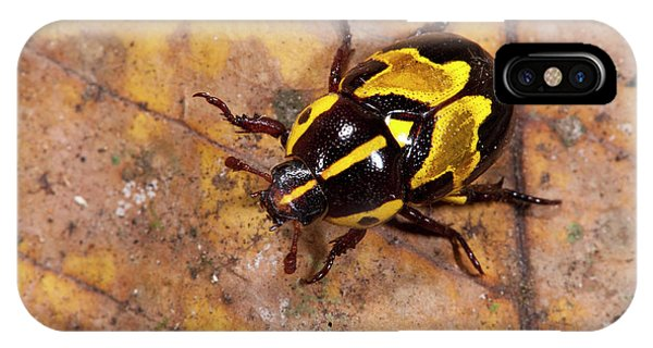 Coleoptera iPhone Case - Ornate Beetle (coleoptera by Pete Oxford