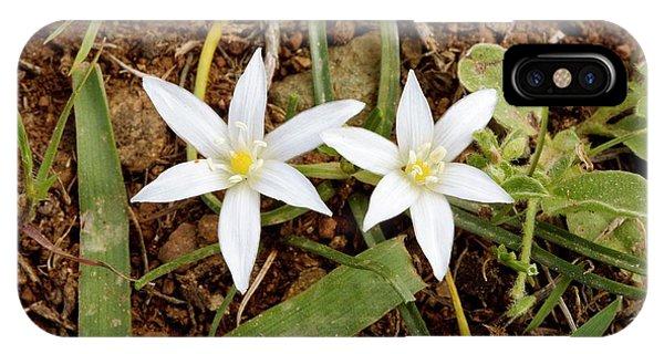 Ornithogalum Pedicellare In Flower IPhone Case