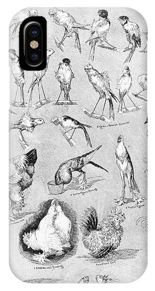 Gamecocks iPhone Case - Ornithology, 1889 by Granger