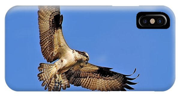 Osprey Beauty IPhone Case
