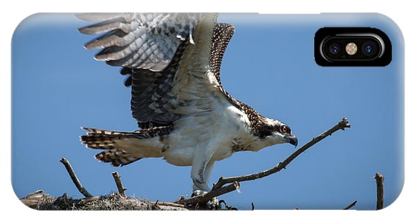 Osprey Departing Nest IPhone Case