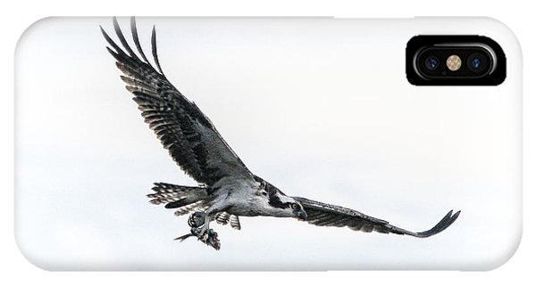 Osprey In Flight IPhone Case