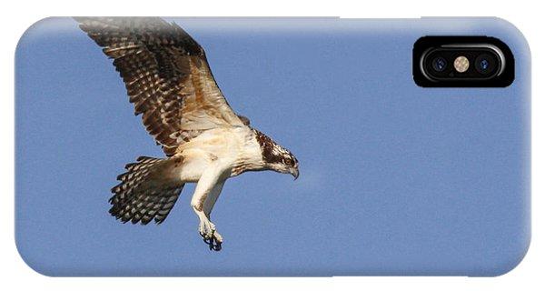Osprey In Flight Phone Case by Jill Bell