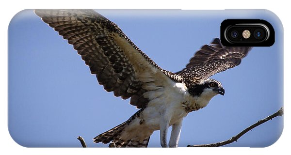 Osprey In Nest Ready To Fly IPhone Case