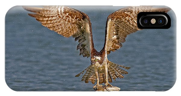 Ospreys iPhone Case - Osprey Morning Catch by Susan Candelario