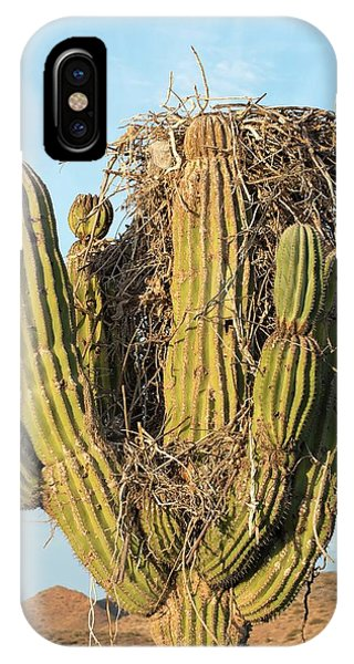 Adapted iPhone Case - Osprey Nest In A Cactus by Christopher Swann