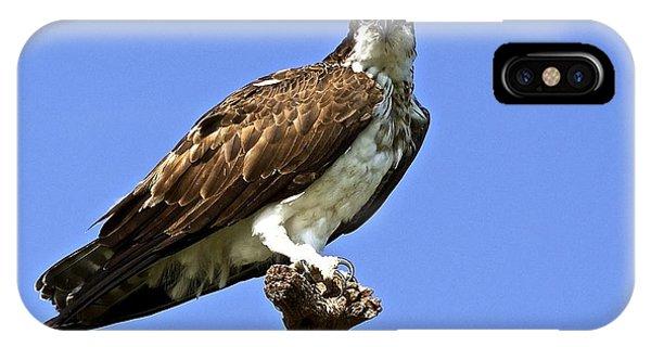 Osprey On Perch IPhone Case