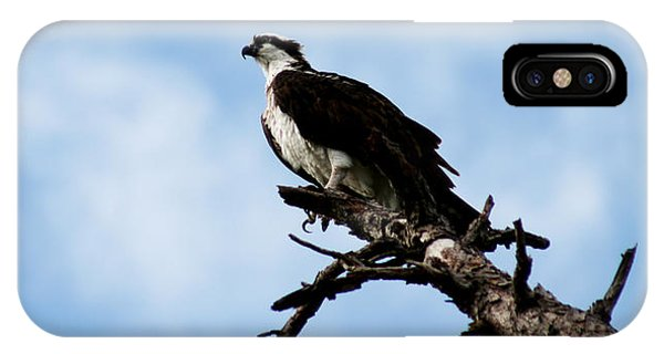 Osprey On Perch IPhone Case