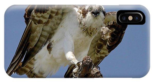 Osprey Or Fish Hawk IPhone Case