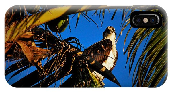 Ospreys iPhone Case - Osprey Paradise by Quinn Sedam