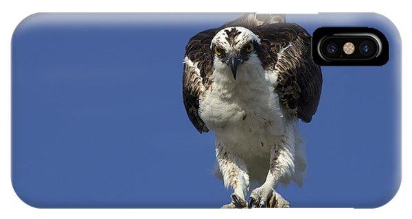 Osprey Photo IPhone Case