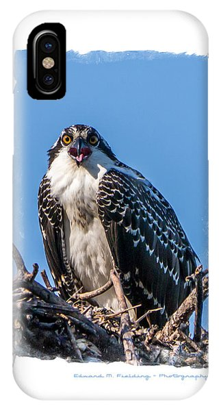 Osprey iPhone Case - Osprey Surprise Party Card by Edward Fielding